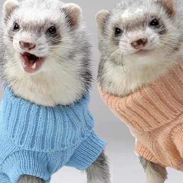 ferret clothes