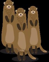 Top Banner Ferret