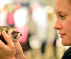 The Business of Ferrets in Croatia An Interview with Petra Logozar