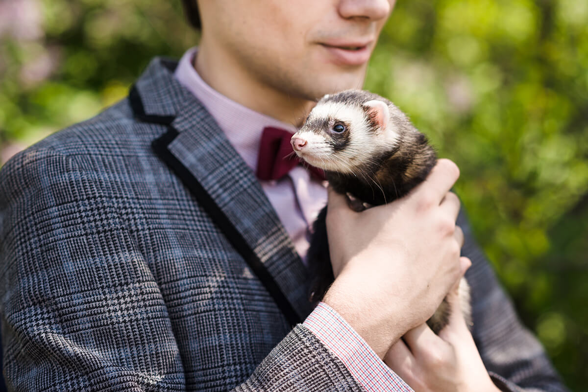 The Standard of Ferret Breeding: Are We Damaging Ferrets For The Sake Of Human Wants?