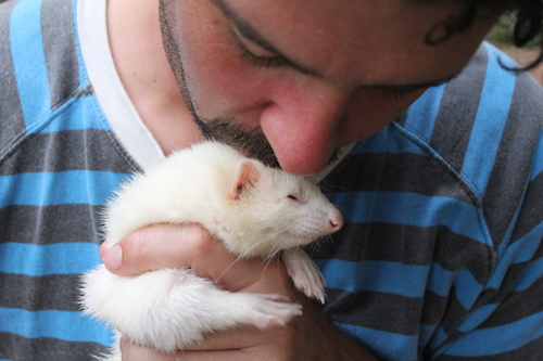 Spend time with some ferrets