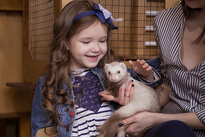 babies and ferrets