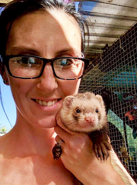 Australia have seen a record number of ferrets ending up in shelters