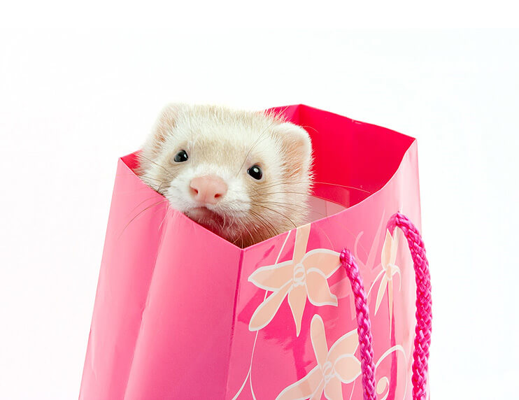 Don't Buy These Useless Ferret Products