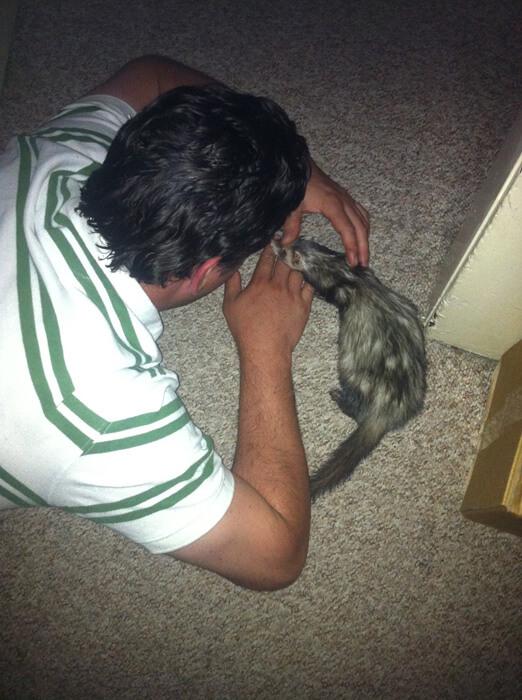 Doug réconfortant Binxi dans ses dernières heures.  Nous avons décidé de la déposer chez le vétérinaire car elle semblait avoir trop mal.  C'était l'une des décisions les plus difficiles à prendre.