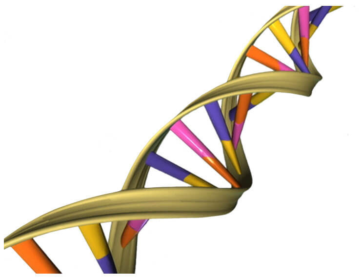 Know Your Ferret Inside and Out: Discoveries from the Ferret Genome Sequence