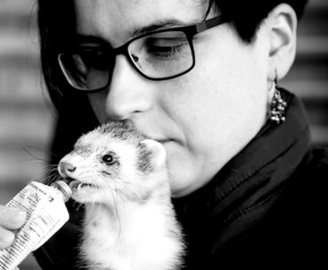 Preventative Care in Middle-Aged and Senior Ferrets: What Else Can We Be Doing?