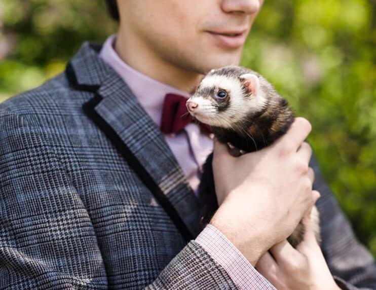 Your Ferret Care Checklist