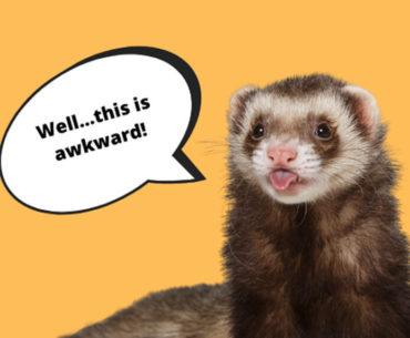 People Are Mistaking Ferret Penises For Belly Buttons And Kissing Them...