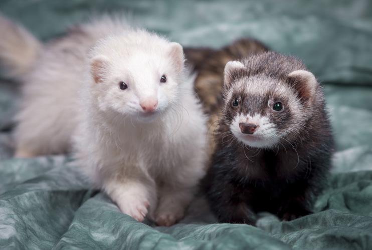 Protein found in ferret food