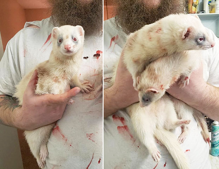 What makeup did you use to zombie-fy your ferrets?