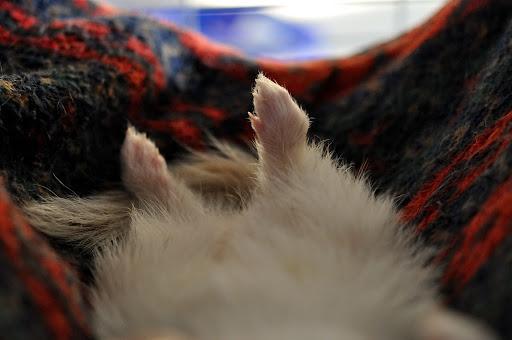 short ferret nails